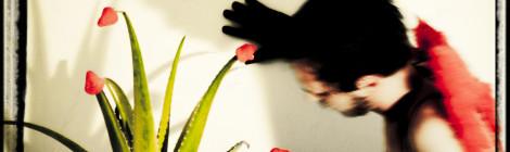 Aloe Fresa